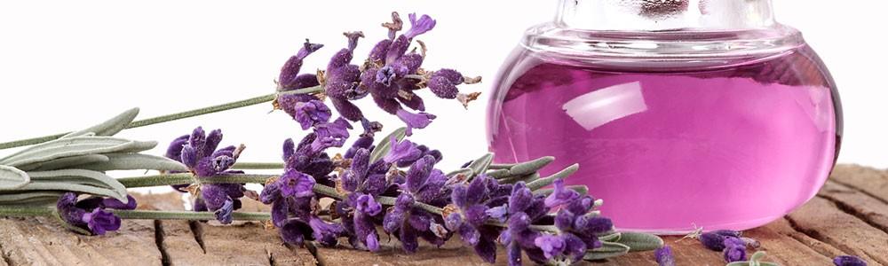 lavender_1000-300-2